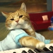The musically talented feline was nine years old at the time of his passing.